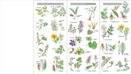 Livre petit atlas des plantes m dicinales 60 plantes pour se soigner lisabeth trotignon - Plante pour soigner les verrues ...