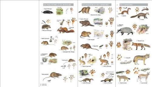 trace et indice des animal