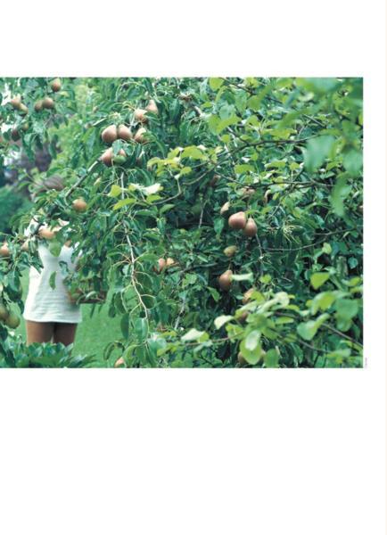 Livre Cr Ez Votre Jardin Fruitier Arbres Et Arbrustes